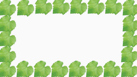 Morus alba or caller mulberry leaf isolated and foto frame mode. Image suitable for wallpaper, background, or graphic resources