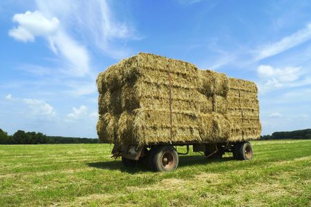 Bales of hay on a trailer standing in a field photo