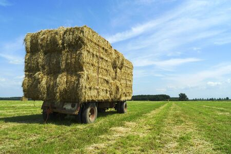 Bales of hay on a trailer standing in the sun