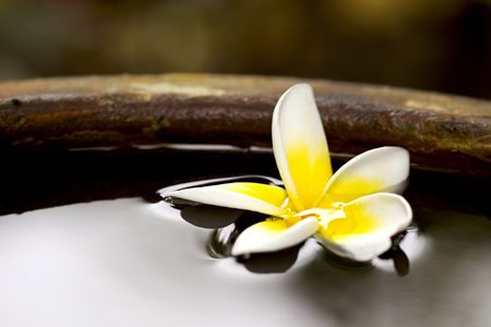 Tropical frangiapani flower floating in water in a stone pot Stock Photo