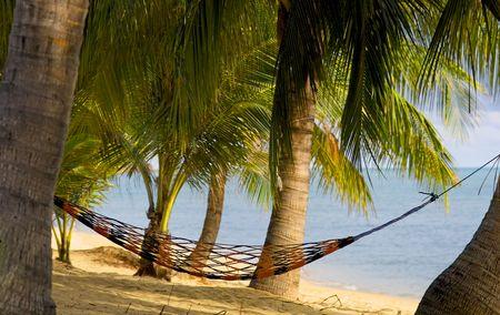 koh tao: Orange hammock hanging between palm trees in Koh Samui in Thailand Stock Photo