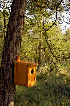 Hand made bird house hanging on a tree trunk