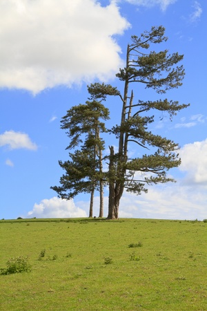 Group of trees standing alone in a field against a blue sky photo