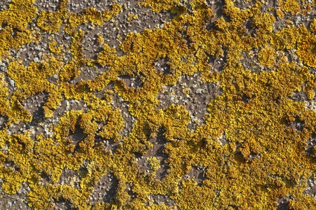 Yellow lichens growing on a stone wall creating a pattern Stock Photo