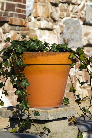 Ivy growing in a terracotta orange pot standing on a wall