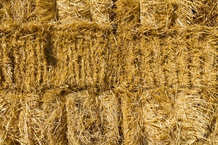 Haystack wall of dried straw in a golden evening shimmering light