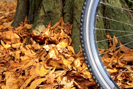 Close up of mountain bike wheel and tire tread with autumn leaves on the ground