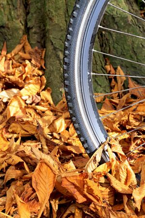 Close up of mountain bike wheel and tire tread with autumn leaves on the ground against a tree Stock Photo