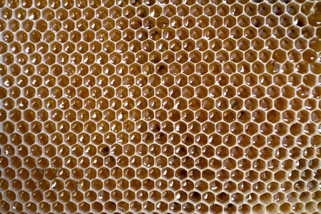 Close-up of honeycomb frame full with honey