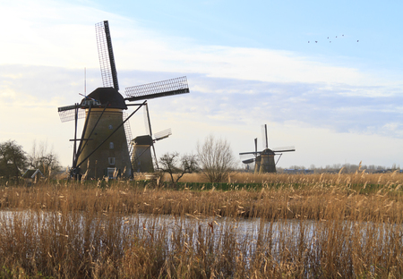 Kinderdijk windmills in early morning sunlight and golden colored reed in the foreground