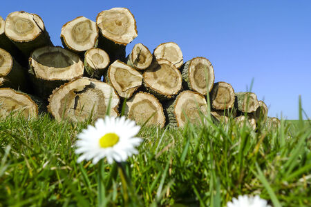 Felled trees stacked up on top of each other in a pile, grass and flowers in the foreground