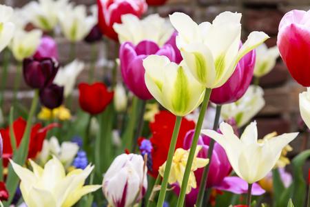 Assortment of vivid garden flowers growing together