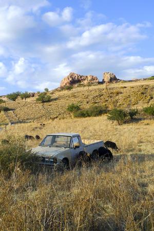 Abandoned pick-up truck on a Greek hillside amongst sheep photo