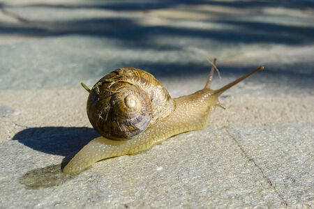 Snail crawling along garden path Stock Photo