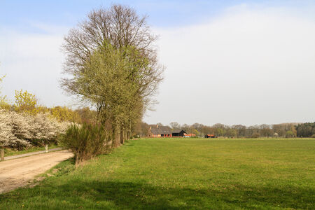 Typiclal Dutch farmland and countryside scene with a grass meadow in the foreground in Brabant in the Netherlands