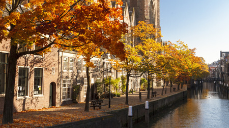 Colorful autumn leaves on the trees next to Dordrecht cathedral.