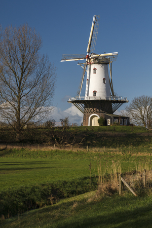 polder: White windmill in Veere standing tall in the polder in the winter sunlight.