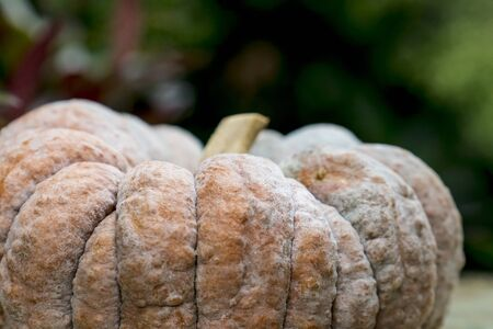 Big pumpkin on a wooden table on display outside a shop. Stock Photo