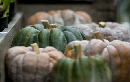Small pumpkins on a wooden table on display outside a shop.