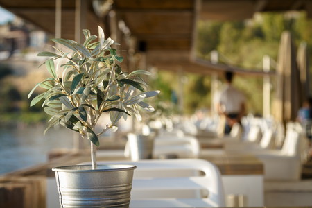 Olive tree on table in restaurant and waiter in background
