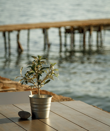 Olive tree on a table at outdoor cafe with wooden pier in background Stock Photo