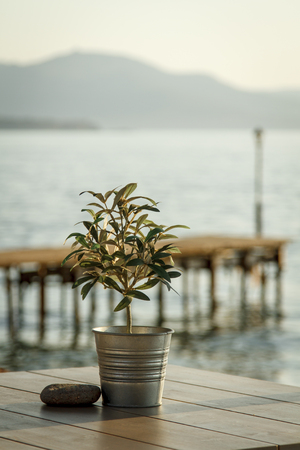 Olive tree on a table at outdoor cafe with wooden pier and mountains in background