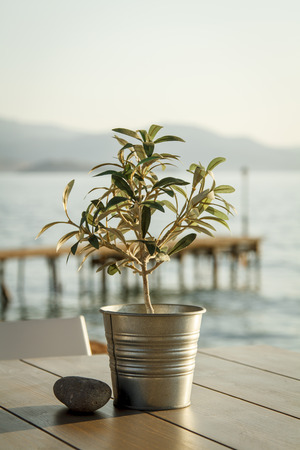 Olive tree and stone on table at outdoor cafe with wooden pier in background