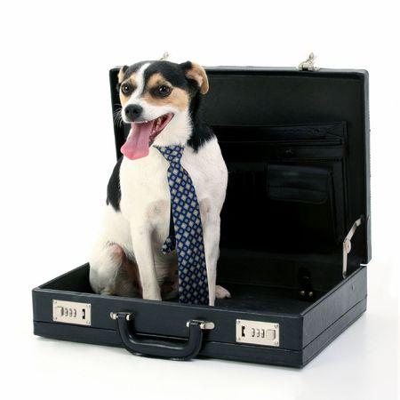 Dog wearing tie sitting in briefcase. Shot in studio over white.