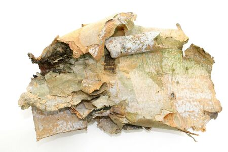 Sheet of bark from a Birch tree on white.