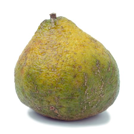 A cross between a mandarin orange and a pomelo (the original grapefruit) native to Jamaica.  Combines the best characteristics of the tangerine, grapefruit and seville orange. Imagens - 3774783