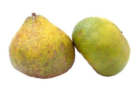 combines: A cross between a mandarin orange and a pomelo (the original grapefruit) native to Jamaica.  Combines the best characteristics of the tangerine, grapefruit and seville orange. Stock Photo