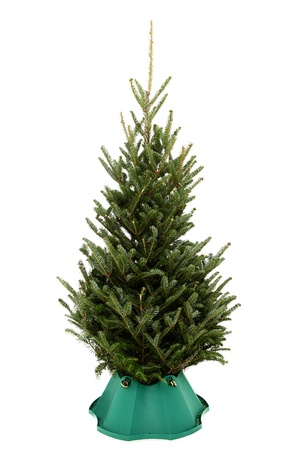 undecorated: Small undecorated christmas tree in plastic tree stand over white background.