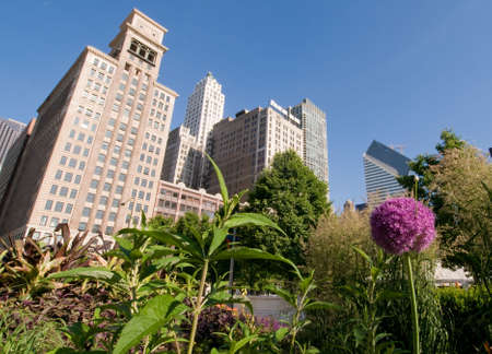 urban jungle: El aumento de hormig�n de la jungla urbana de Chicago domina y domina la fragilidad de un jard�n. Las curvas de la p�rpura allium y hojas verdes contrastan con la angularidad de los rascacielos. Foto de archivo