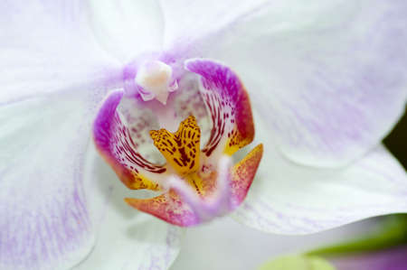 Close-up of an orchid, selective focus