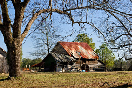 old farm: An old dilapidated  farm building with a rusting tin roof is still home to livestock. Stock Photo