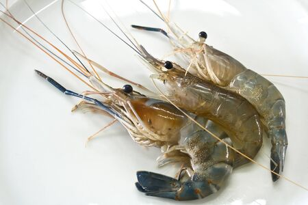 Giant freshwater prawn photo