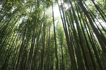 竹の下からのショット