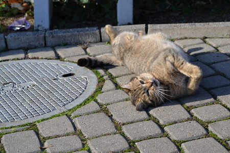 bask: bask cat lying on the Sun December 28, 2015 Piestany Slovakia