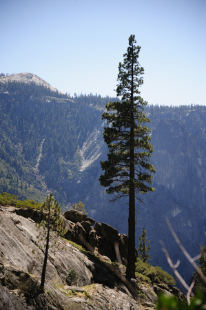 Trees marking the top part of the upper Yosemite Falls
