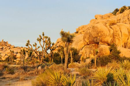 The Barker Dam Area in Joshua Tree during the golden Hour. This area hosts a small lake, which contains an abundance of wildlife.