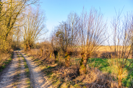 A small Country road in the Flemish Country side in Belgium on a clear winter evening.