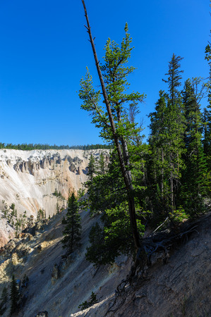 A single tree growing on the slopes of the banks of the Yellowstone river. Image from the grand canyon of Yellowstone. Yellowstone National Park, WY, USA, 스톡 콘텐츠