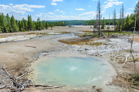 An overview of teh Norris Geyser Basin in Yellowstone National Park