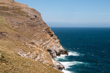 These cliffs hold one of the most massive breeding colonies of Black Browed Albatrosses in the Worlds. The place is also abundant with Rockhopper Penguins Foto de archivo