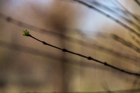 Sprouting Buds against a brown backgroup