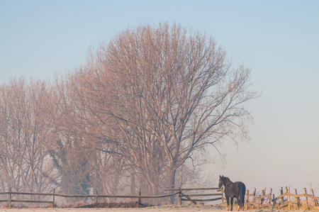 Telephoto shot of a horse against a line of trees in a frosty landscape Stock Photo