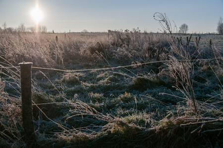 Backlit image of a frosty landscape. Early morning in winter in east Flanders, belgium. Stock Photo