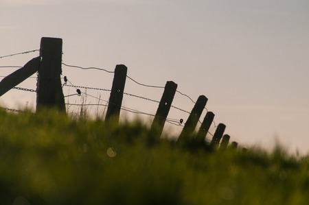 Detail of a barbed wire fence, somewhere in east flanders, belgium. Stock Photo
