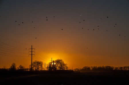 Silhouttes of birds are flocking around a powerline that runs through the east-flemish country side. Backlit image of a sunset in early january.