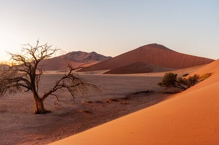 The rising sun illuminating the mighty dunes of the sossusvlei, as seen from dune 45, in Nambia.